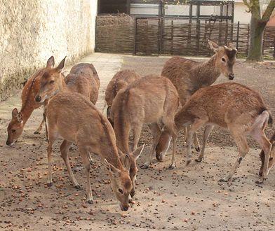 Warszawskie Zoo. Zbiórka przysmaków