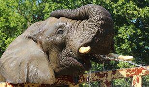 Warszawskie Zoo - Facebook