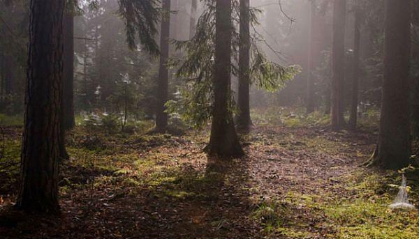 Tajemnicza śmierć w Lesie Kabackim. Biegli: Jolanta Brzeska nie miała skłonności samobójczych