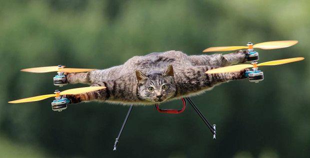Obowiązkowe dla wpisu blogowego zdjęcie kota :) (źródło: metro.co.uk)