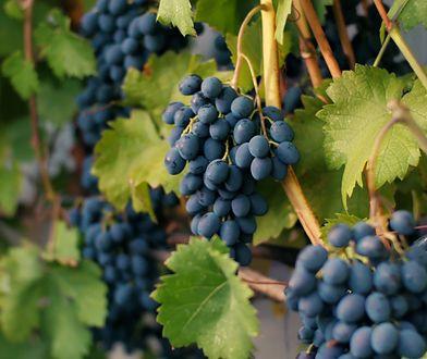 Właściwości winogron