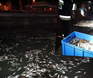 Zalew w Krakowie zatruty? 150 kg śniętych ryb