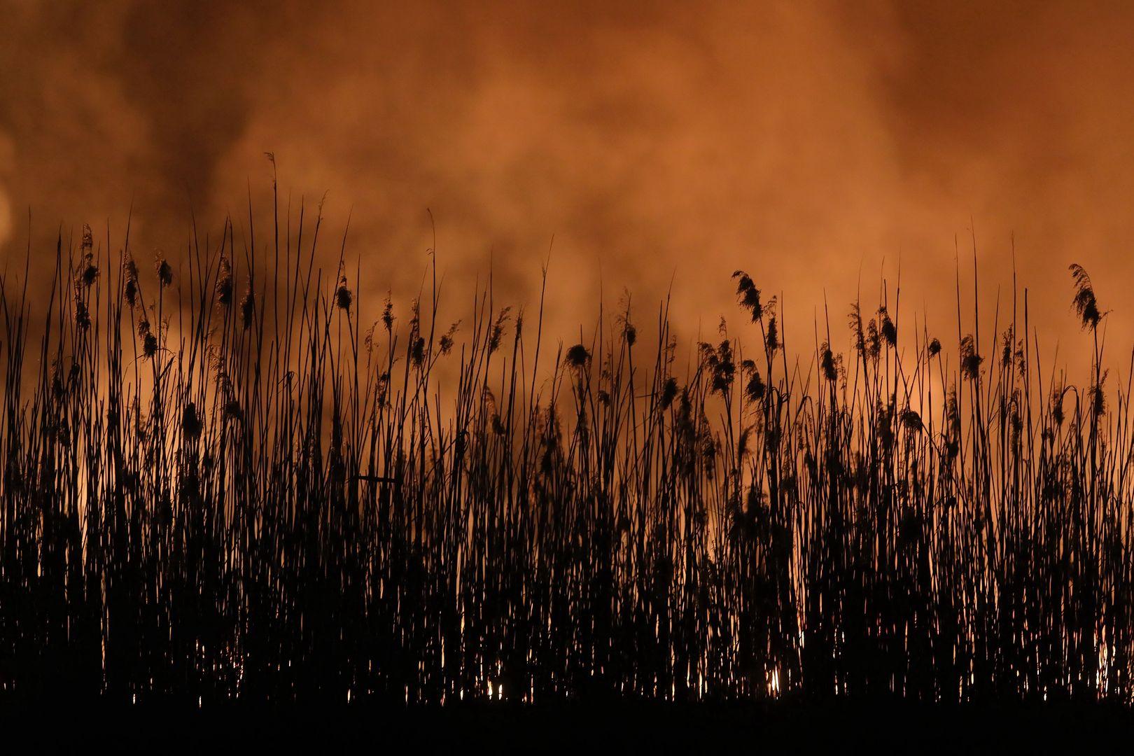 Pożar w Biebrzańskim Parku Narodowym w pobliżu wsi Wroceń