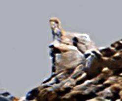 Tajemniczy posąg na Marsie. Zdjęcie NASA zafascynowało internautów
