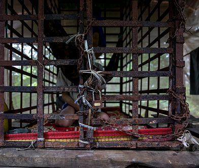 W Kambodży chorych psychicznie zamyka się w klatkach