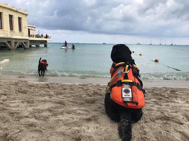 Włosi mają nowego bohatera. Jest nim pies-ratownik Otto