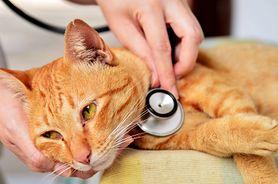 FIV, czyli koci AIDS – objawy, zarażenie, leczenie, zapobieganie