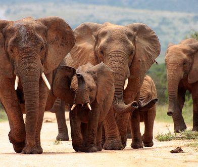 Susza w Namibii. Dzikie zwierzęta na sprzedaż