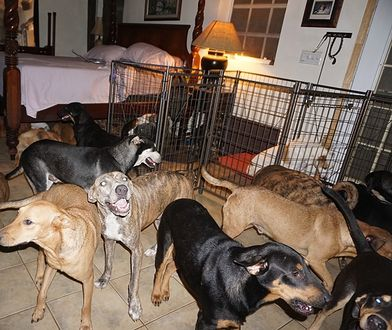 Psy znajdują się w każdym kącie domu - za wyjątkiem łóżka swojej wybawicielki