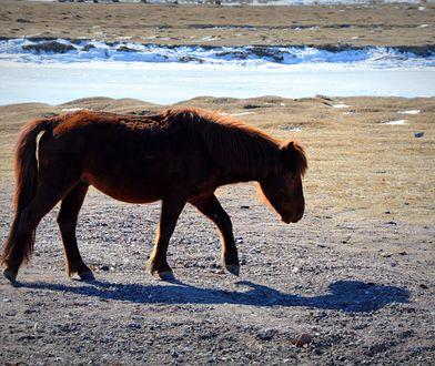 Mongolia – podróż po błękit