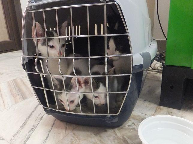 7 kotków porzuconych w tramwaju