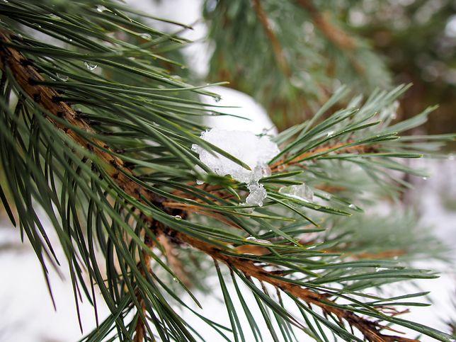 W Polsce nadal zima. W sobotę w wielu miejscach sypnie śniegiem