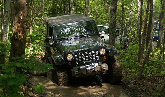 offroad,las,samochód terenowy