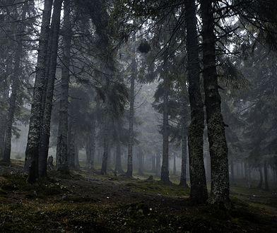 Informacje o kobiecie błąkającej się po lesie docierały z kilku miast Polski