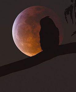 Najlepsze zdjęcia Krwawego Księżyca. Niezwykłe zjawisko