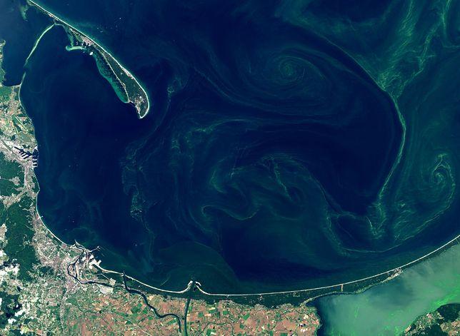 Bałtyk i sinice sfotografowane przez satelitę Sentinel.