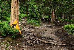 W góry z psem nie pójdziesz! Karkonoski Park Narodowy wprowadził zaskakujący zakaz
