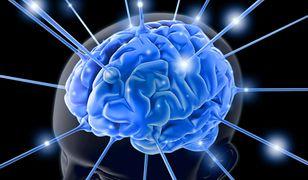 Jedzenie, które wpływa na pracę mózgu