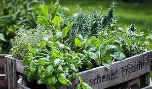 Po jakie zioła warto sięgać latem? Praktyczny przewodnik