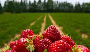 Spożycie owoców i warzyw rośnie. Trend już niedługo się zmieni