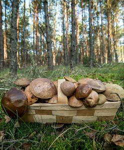 Mapa grzybów w Warszawie. Gdzie na grzybobranie?