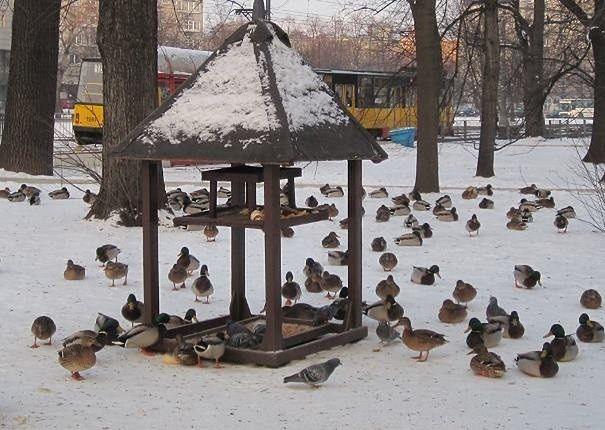 """Zimowe rozwiązanie dla kaczek i łabędzi. """"W Warszawie działają ptasie stołówki"""""""