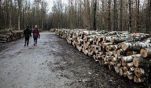 Poznań. Kobiety spacerowały z psami w lesie. Naprzeciw wyszedł im mężczyzna z nożem