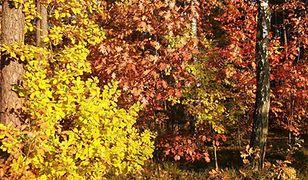 Zagadka jesiennych liści