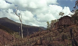 Koniec świata za 40 lat? Naukowcy ostrzegają: katastrofa ekologiczna jest nieunikniona