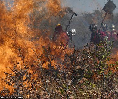 Amazonia. Pożary lasów Amazonii, strażacy walczą z ogniem w Brazylii i Boliwii