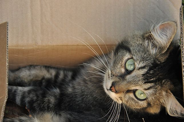 Kot w kartonowym pudełku