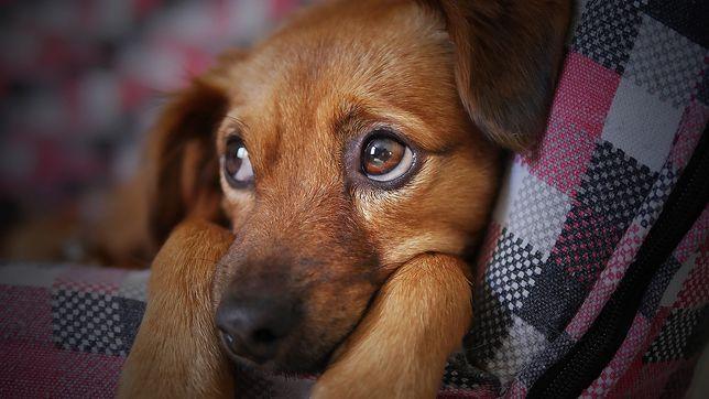 Sylwester 2019. Co zrobić, by zwierzę się nie stresowało? Skuteczne porady