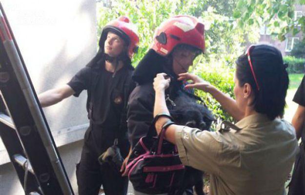 Nowa Huta: zostawił psa na nagrzanym balkonie i wyszedł z mieszkania