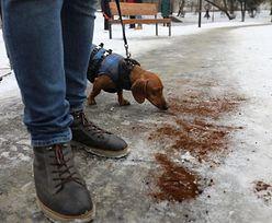 Zainspirowali się Lwowem. Kraków wysypuje kawę na ulice