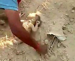 Ktoś usłyszał płacz dziecka dochodzący spod ziemi. To był prawdziwy cud