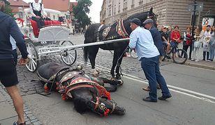 Dorożkarski koń upadł pod Wawelem