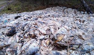 700 kilogramów ryb wyrzuconych do lasu. Leśnicy: nie potrafimy zrozumieć