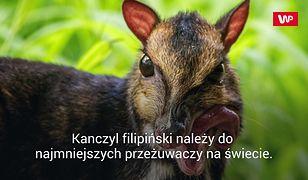 We wrocławskim zoo przyszedł na świat myszojeleń