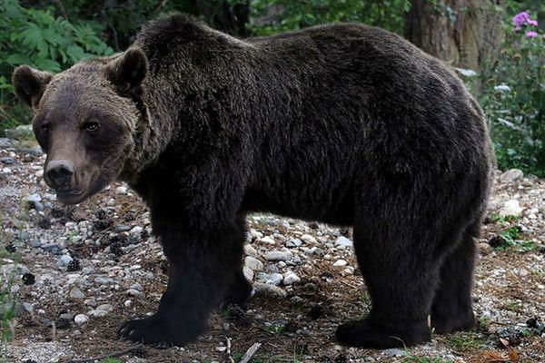 W Bieszczadach gady i nietoperze już śpią; niedźwiedzie wciąż aktywne