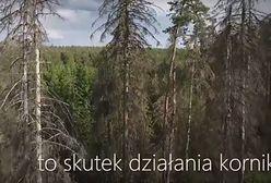 """Lasy Państwowe pokazały nowy film. """"Te drzewa są martwe. Trzeba działać"""""""