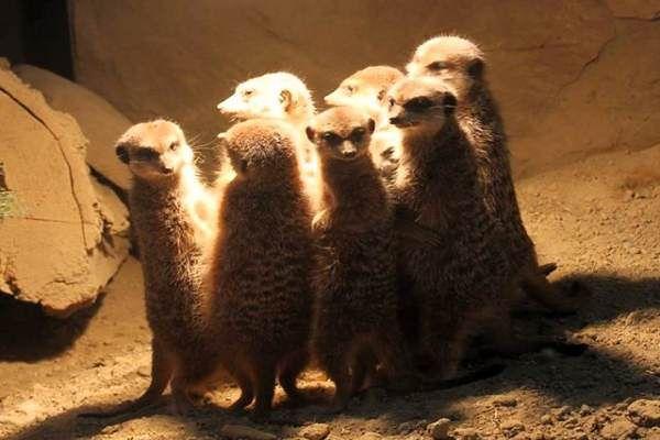 Jak kochają się zwierzęta? Gdańskie zoo pokaże to w Walentynki