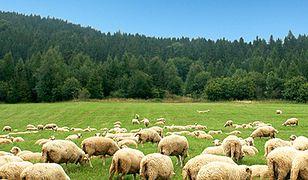 Projekt TRaFooN: Naukowcy wspierają małych producentów żywności na rynkach europejskich