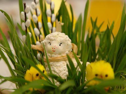 Jak przetrwać Wielkanoc? Przepisy!