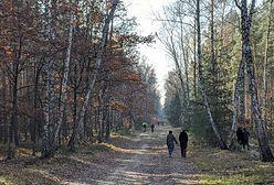 Mieszkańcy stolicy zamiast na cmentarze ruszyli do lasów i parków
