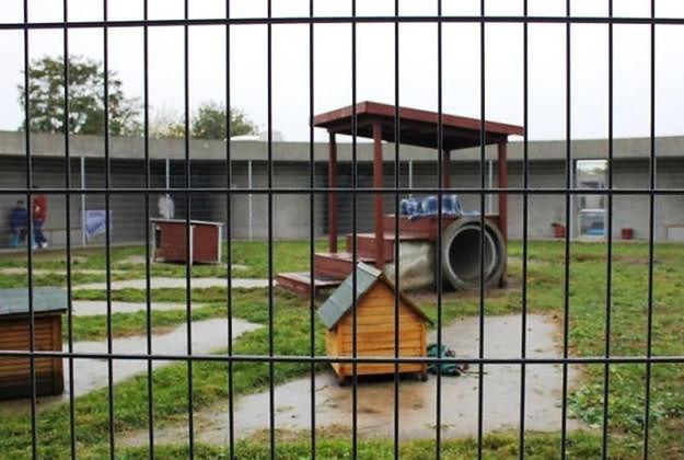 Tak wygląda schronisko dla zwierząt w Berlinie.