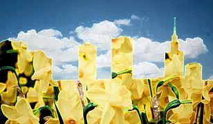 19 kwietnia żółto na ulicach Warszawy!
