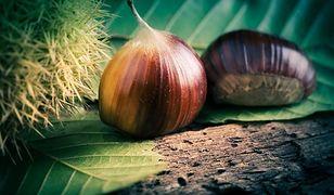 ZOM dba o jesienne liście. Jak zwalczyć szrotówka kasztanowcowiaczka?