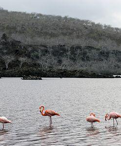 Galapagos. Leonardo DiCaprio przekaże miliony na ratowanie przyrody