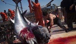 Tradycyjny połów tuńczyka