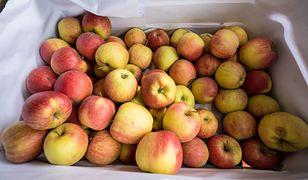 Polskie jabłka osiągnęły historyczne ceny.